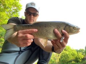Chub — Jordan Monkey Fishing