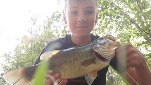 Largemouth Bass — Abel Duges
