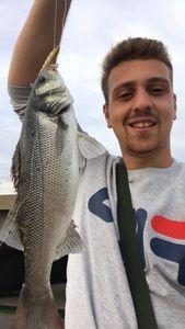 European Bass — Emeric Demarez