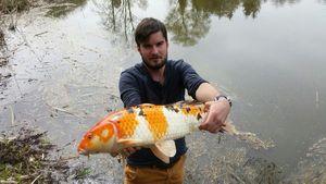 Koï Fish — Jules Blanc