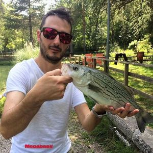 Striped Bass (Landlocked) — Alessandro Pesci