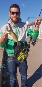 Largemouth Bass — Vincent Pes