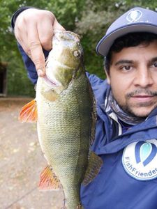 European Perch — Greg FishFriender