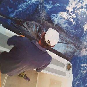 Marlin Bleu (Atlantic) — Salomao Lopes