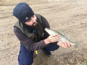 Zander — Spyder Fish