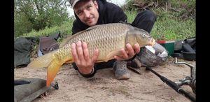 Common Carp — Nicolas  Bonhomme