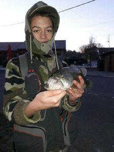 Largemouth Bass — Robin  Albert