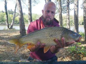Common Carp — Mickael Bignolais