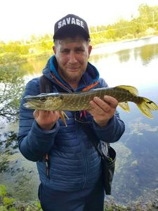 Northern Pike — Flavien carpentier