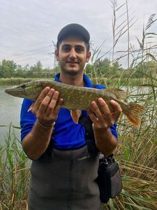 Northern Pike — Florian  Pennone