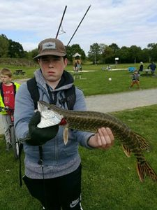 Northern Pike — Lilian Le Cadre