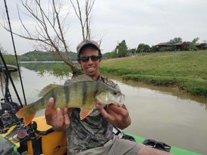 Yellow Perch — Nicolas Cure