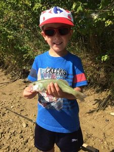 Largemouth Bass — Nicoco Tortul