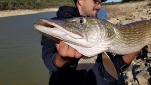 Northern Pike — Damien Linsola