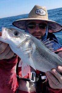European Bass — Raph CSMPêche