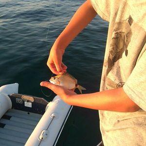 Annular Seabream — BlackfisH 🎣