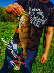 European Perch — Alex Fishing