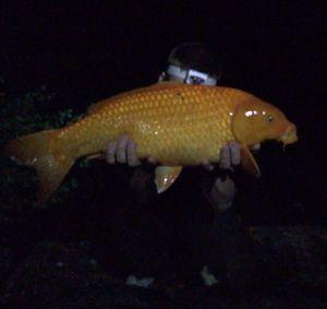 Koï Fish — Guillaume Lermier