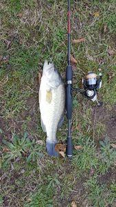Smallmouth Bass — Romain Bourcier