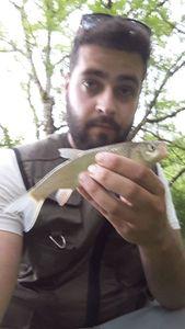 Chub — Spyder Fish