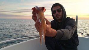 European Squid — Jordan  Decomps