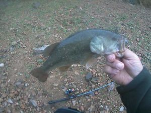 Smallmouth Bass — Destree Damien