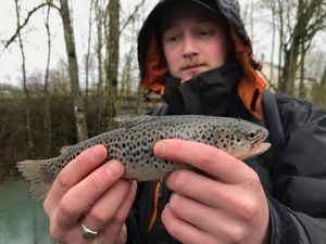 Brown Trout — Vincent MonkeyFishing