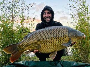 Common Carp — Julien Haguet