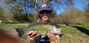 Largemouth Bass — Kheltoum DAUBRON