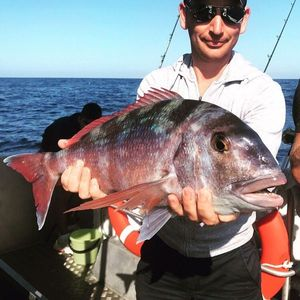 Red Porgy — Greg Teamtraillate