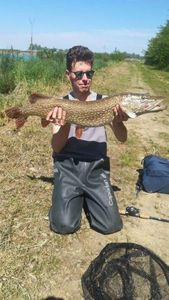 Northern Pike — Guillaume Bisognin