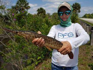 Alligator Gar — Chrystel Kimmerling Maistrello