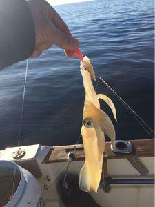 European Squid — Yannick Riviere