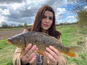 Common Carp — Marie Bouyer