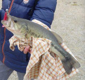 Largemouth Bass — Joseph Cheval