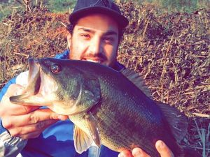 Largemouth Bass — Franck Sossy Gurrieri Pba
