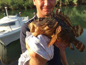 Red Scorpionfish — Romain Coquet