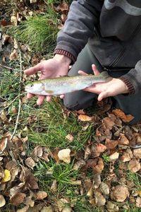 Rainbow Trout — Nicolas Perot