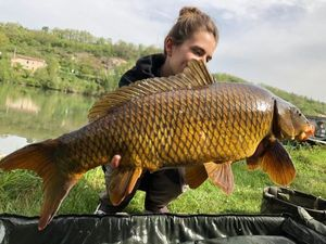 Common Carp — Manon Compan