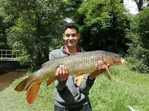 Common Carp — chems maiga