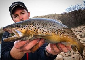 Brown Trout — kevin gueniot