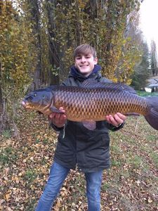 Common Carp — Nico Ljd