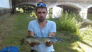 Northern Pike — Damien Costard