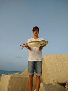 Bluefish — Alessio Morbiducci