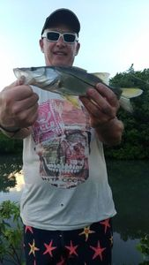 Common Snook — Tynilla Fishing