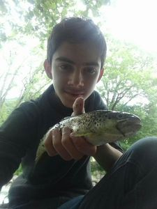 Brown Trout — Thomass Fishing