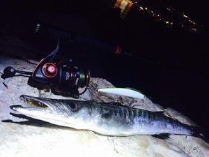 Great Barracuda — Tony Fish