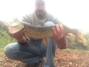 Northern Pike — Thierry Marcillat