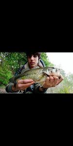 Largemouth Bass — Corto Oliva