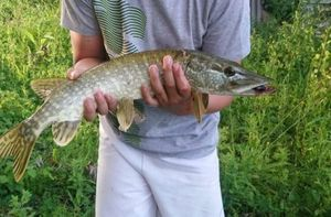 Chain Pickerel — Nathan Ribeiro